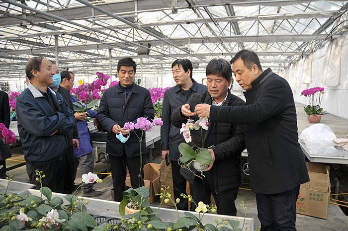 宝鸡市委常委、副市长王宁岗来苗木中心调研指导工作